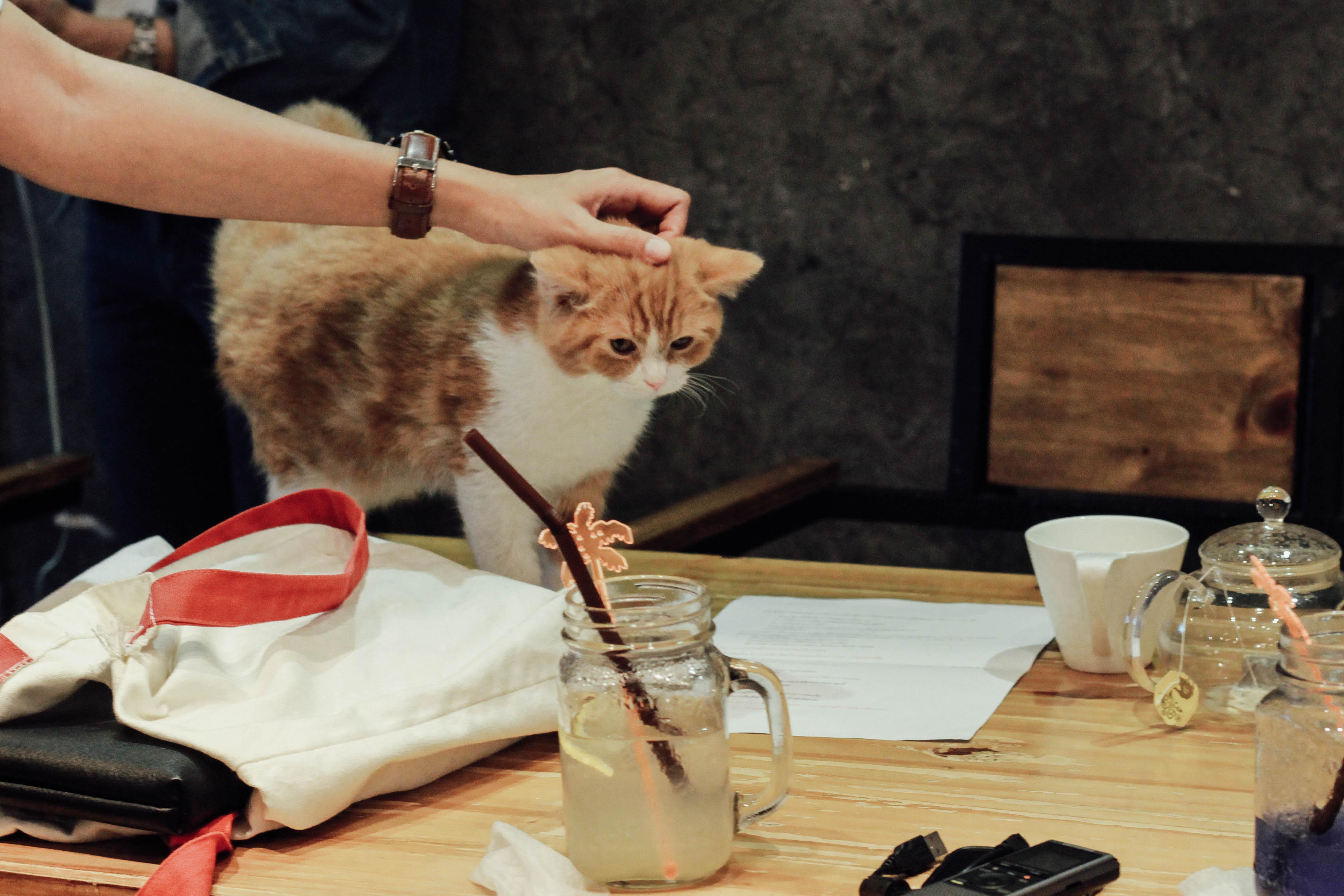 รีวิวร้าน The Animal Cafe คาเฟ่สัตว์ย่านพระราม 3